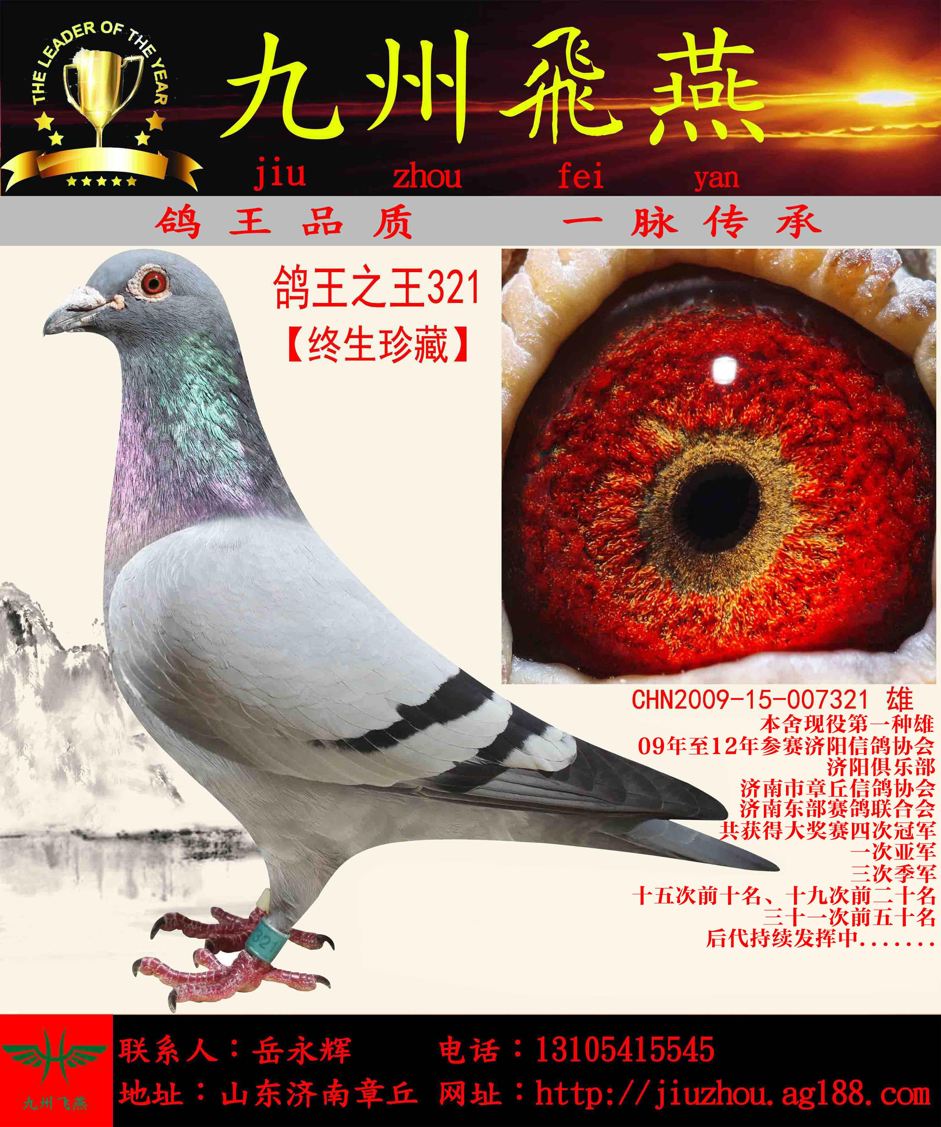 【鸽王之王321】仅供欣赏