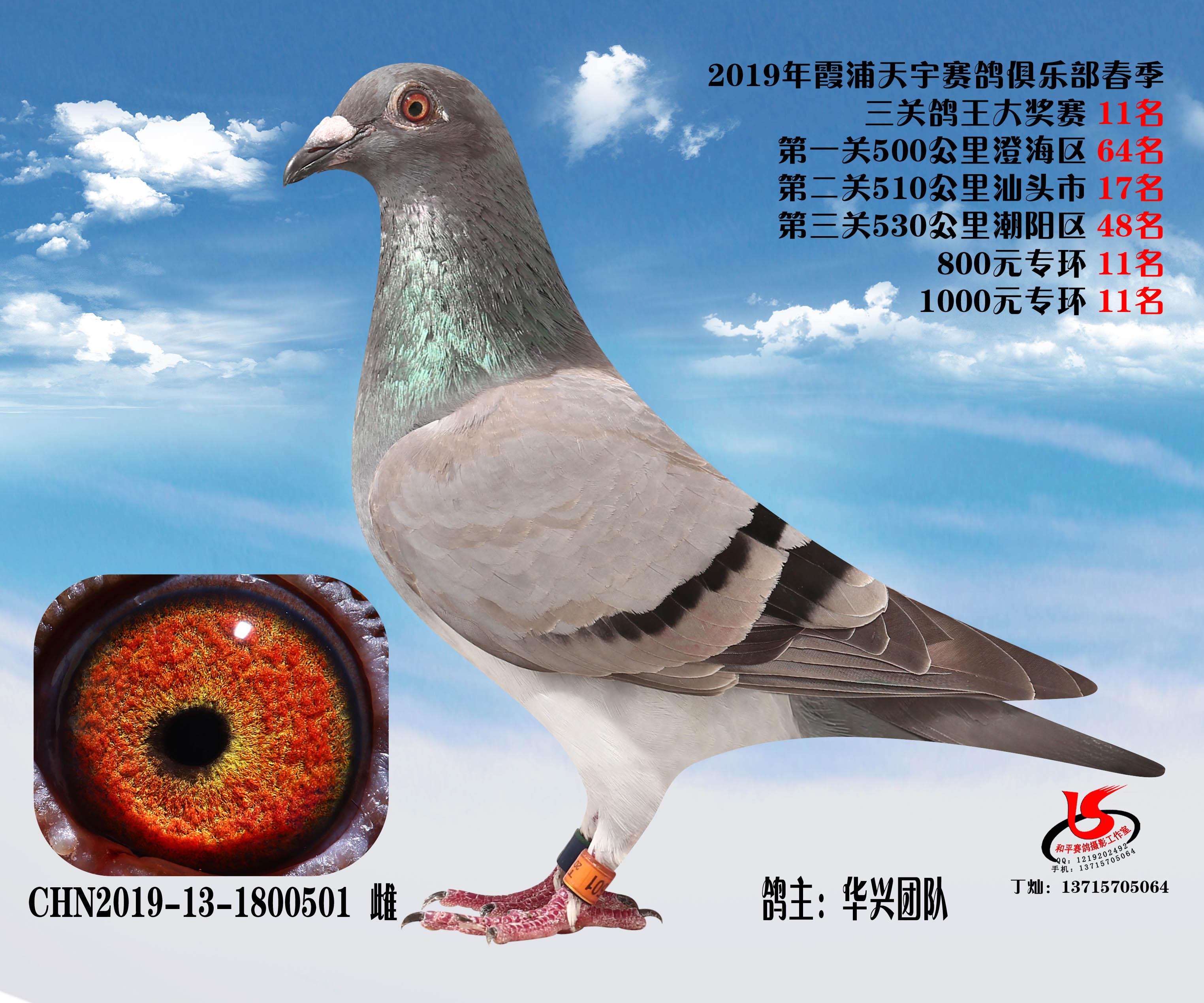 1800501(雌)