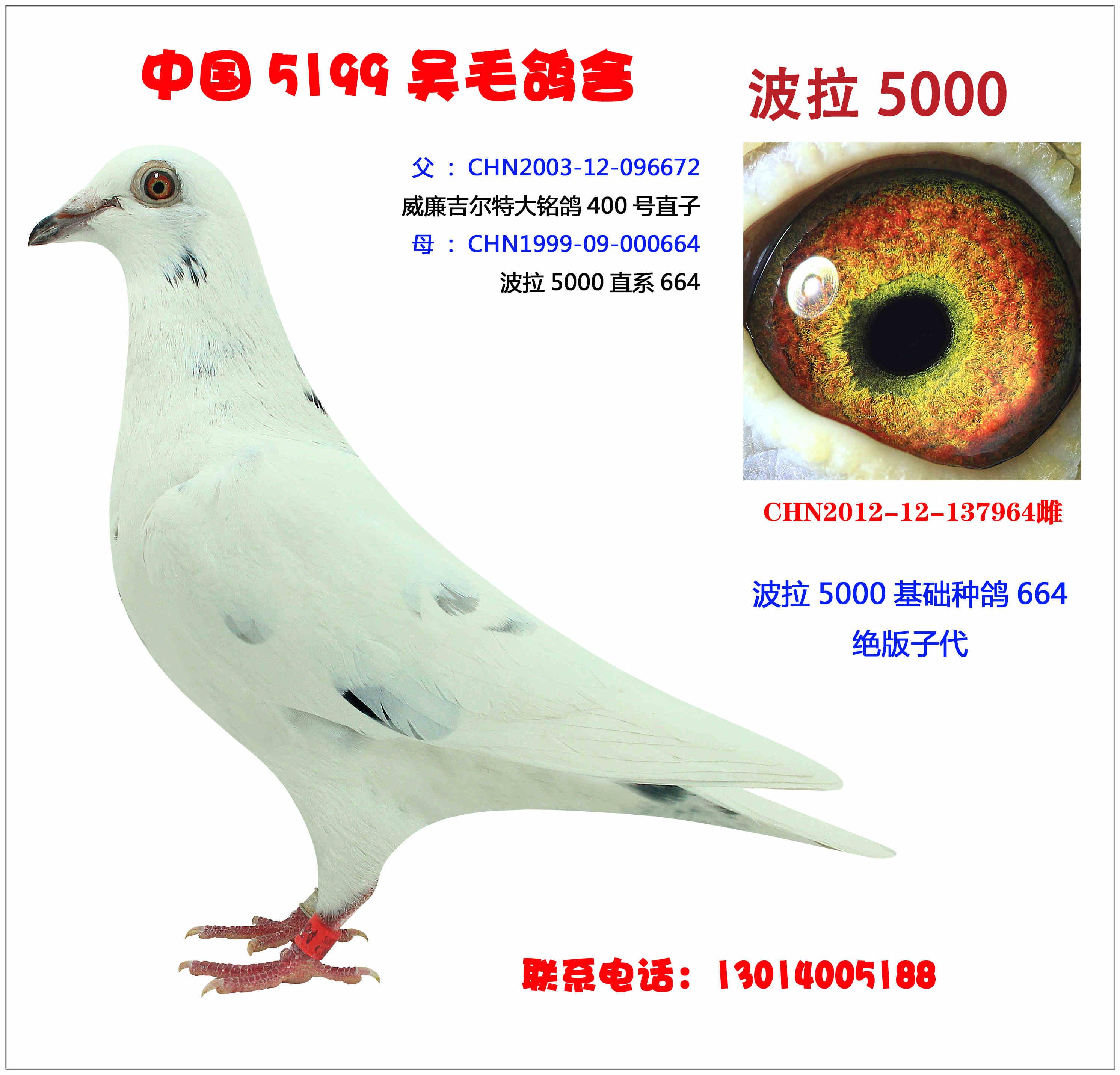 波拉5000-964