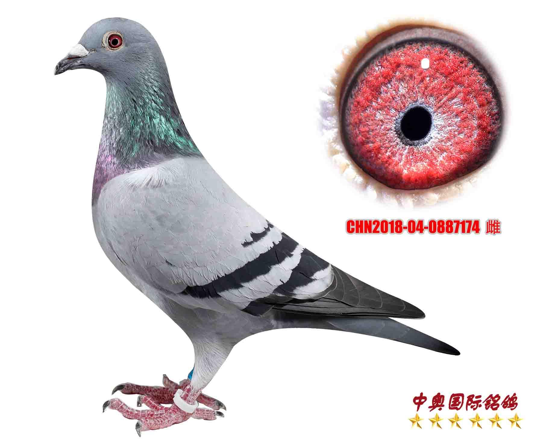 CHN2018-04-0887174