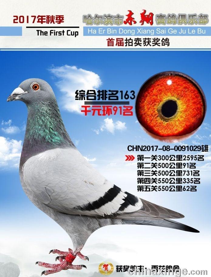 哈尔滨东翔千元特比91名