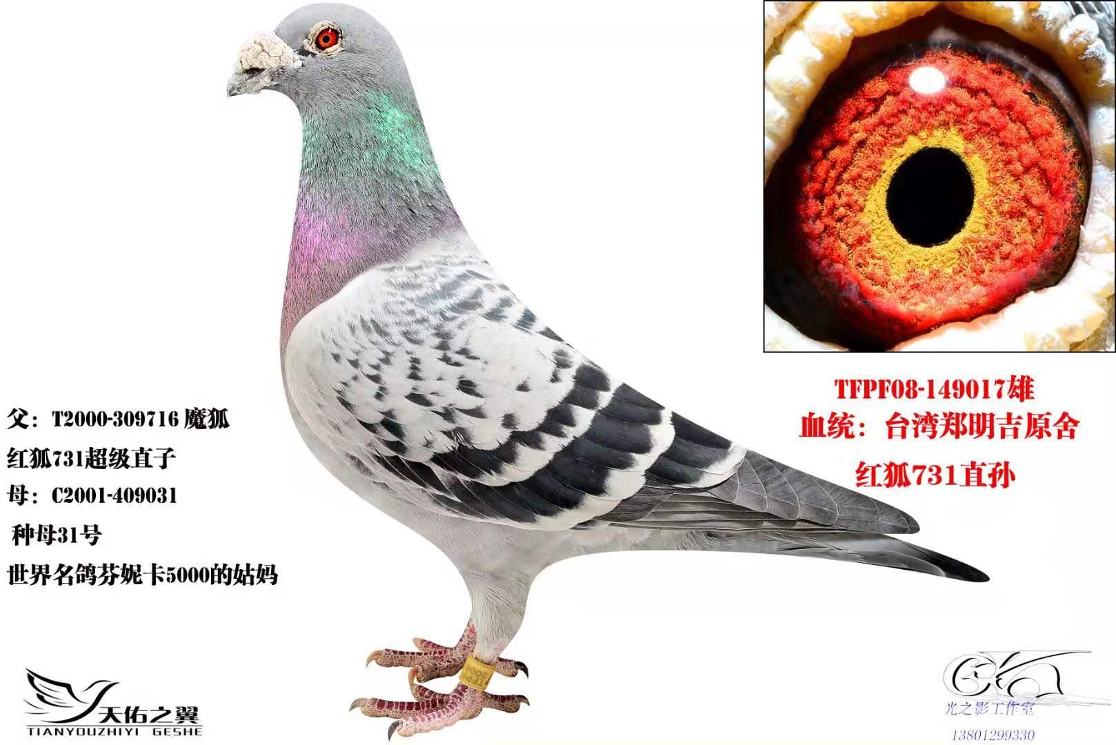 红狐731直孙
