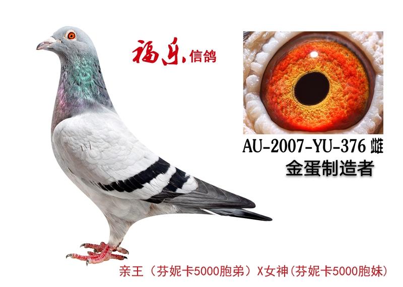 376)金蛋制造者