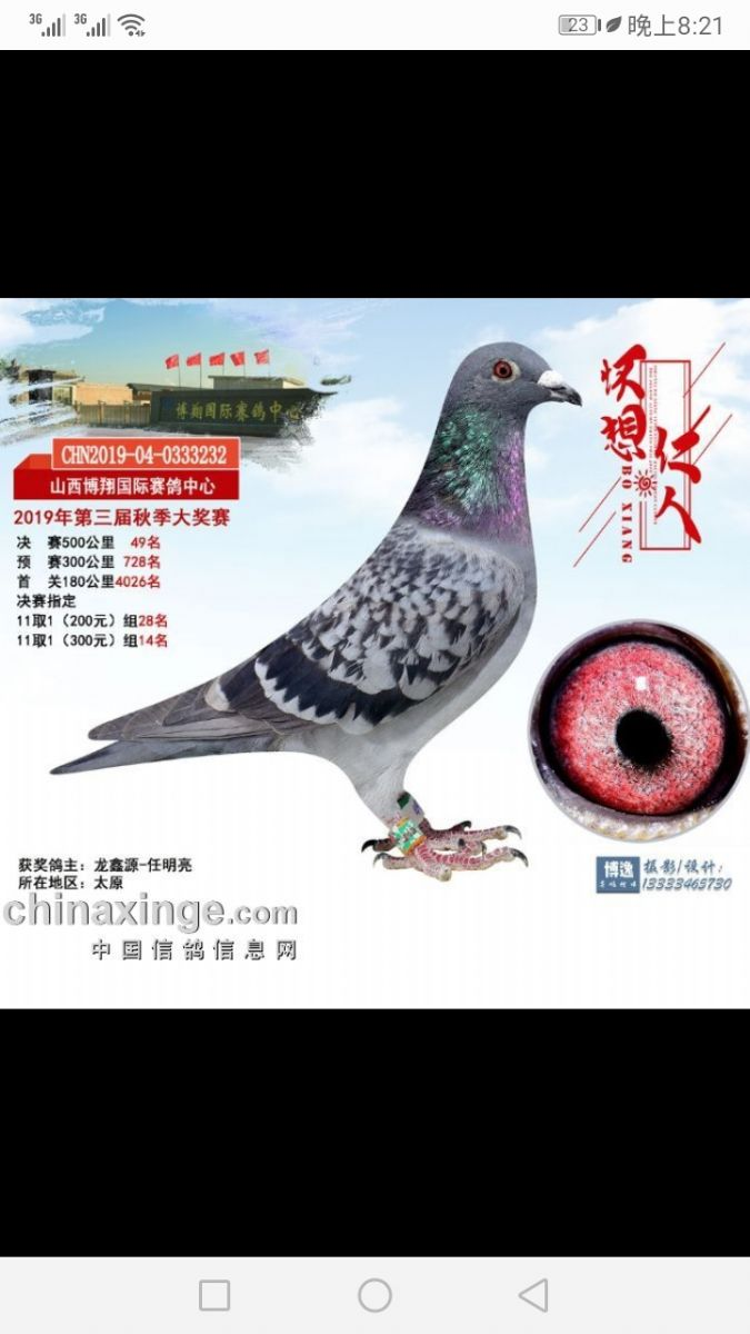 龙鑫232