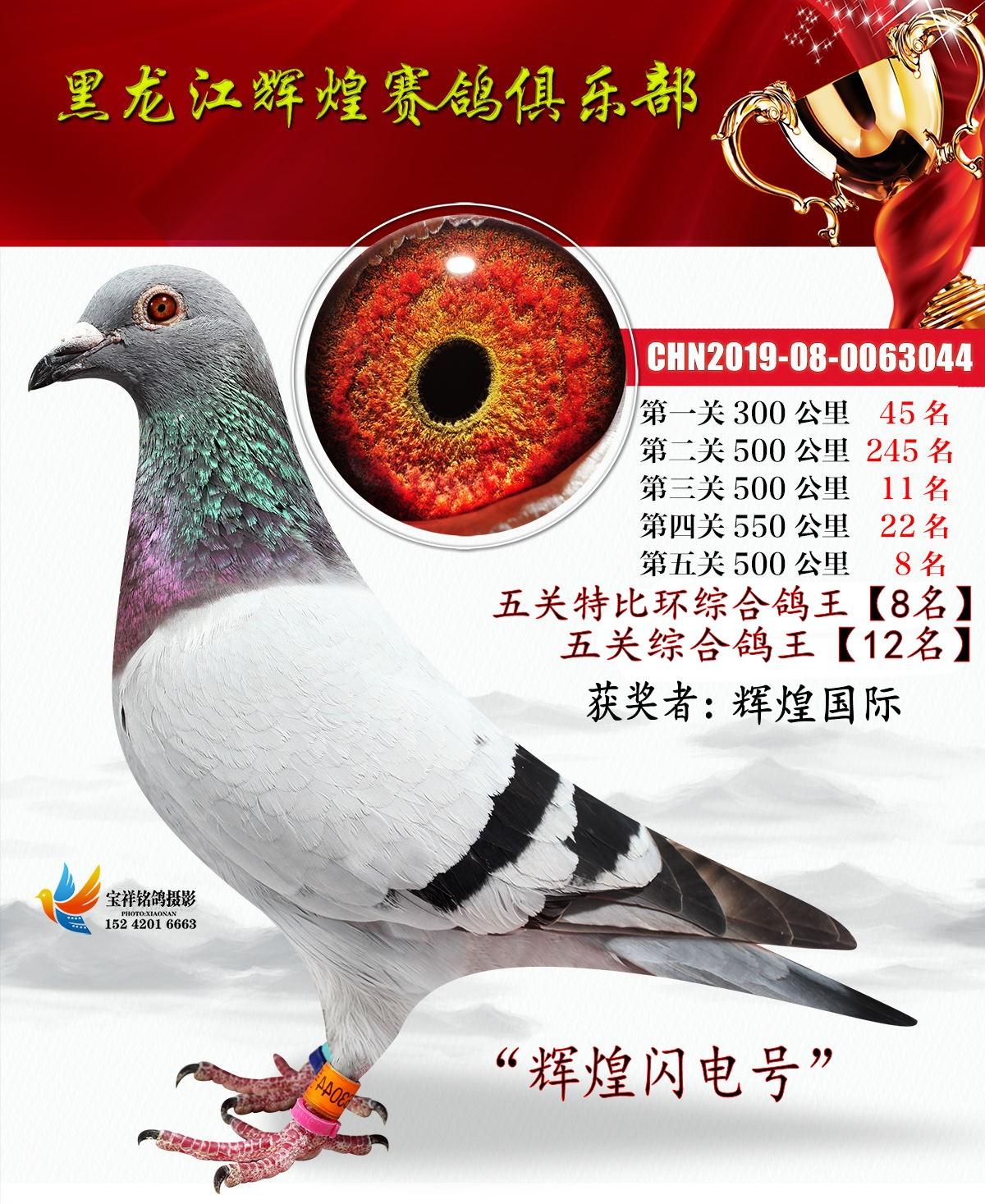 五关综合鸽王8名