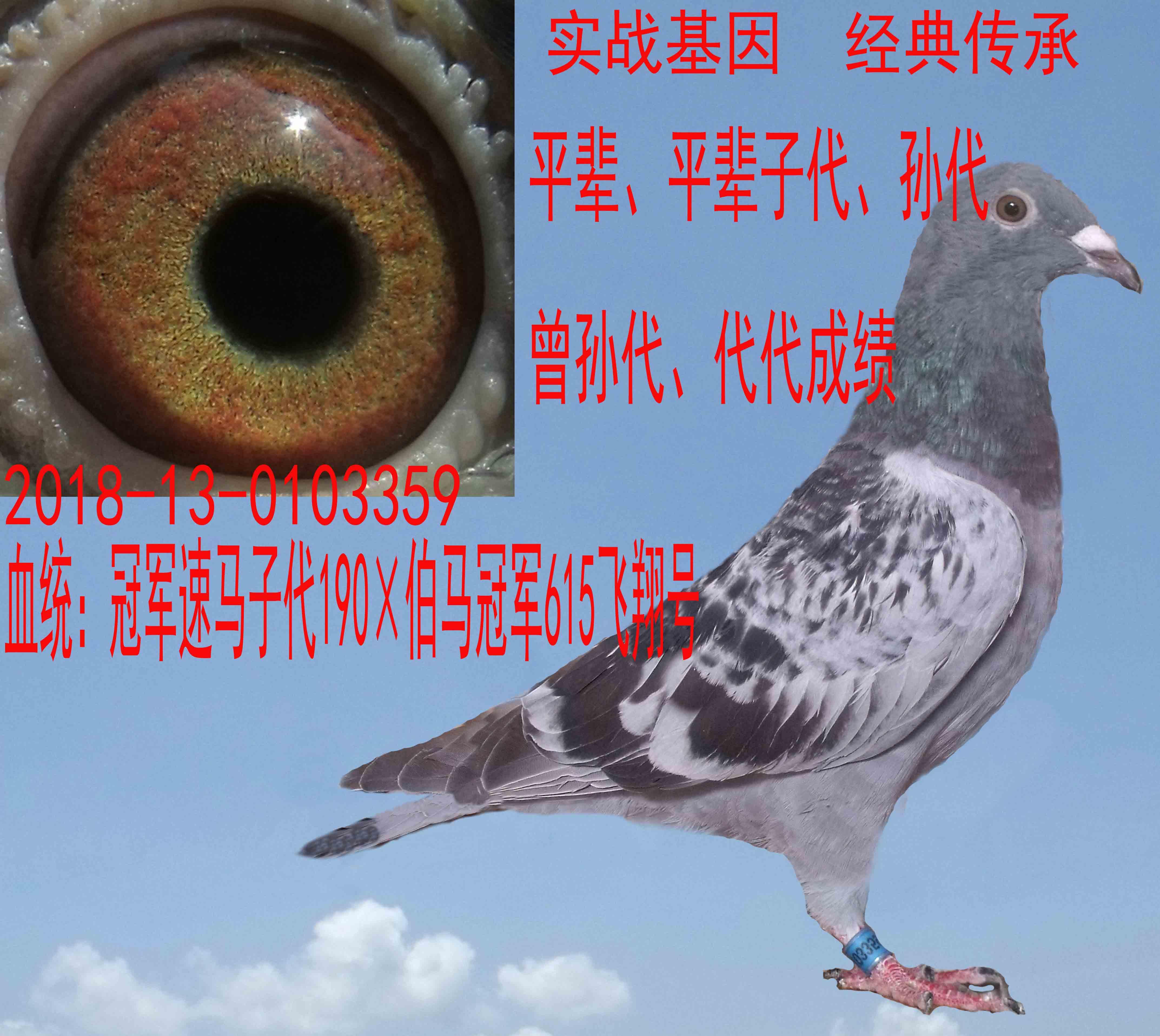 郭氏天马359