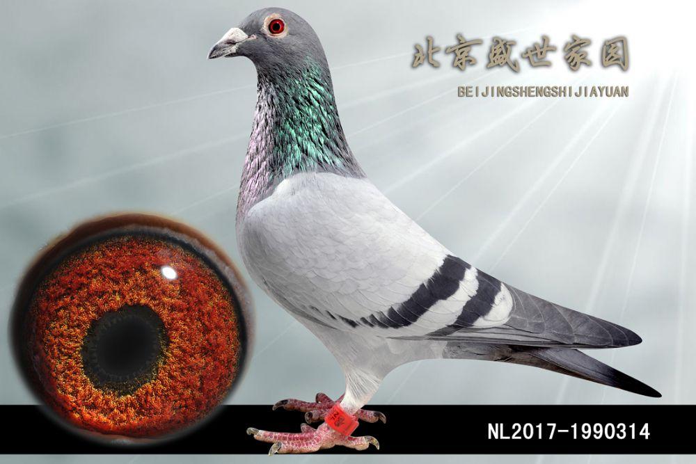NL2017-1990314
