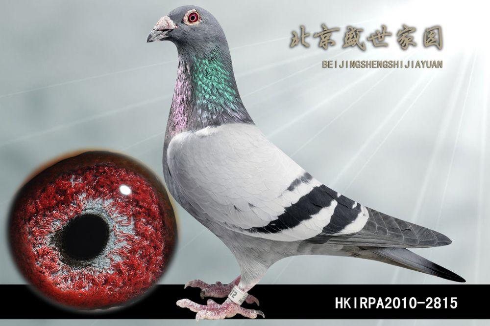 HKIRPA2010-2815
