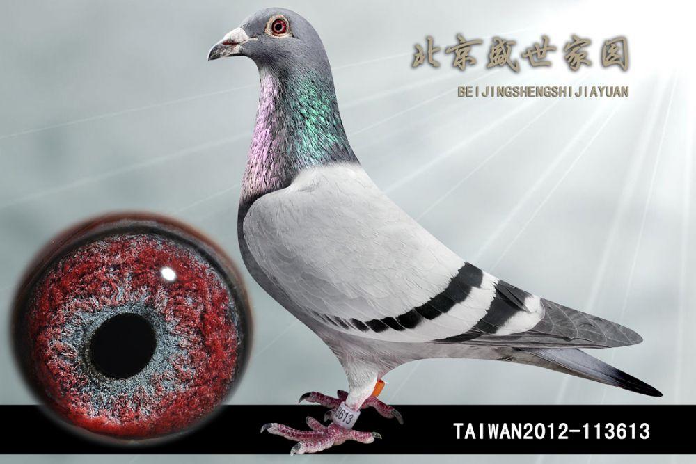 TAIWAN2012-113613