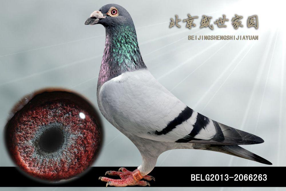 BELG2013-2066263