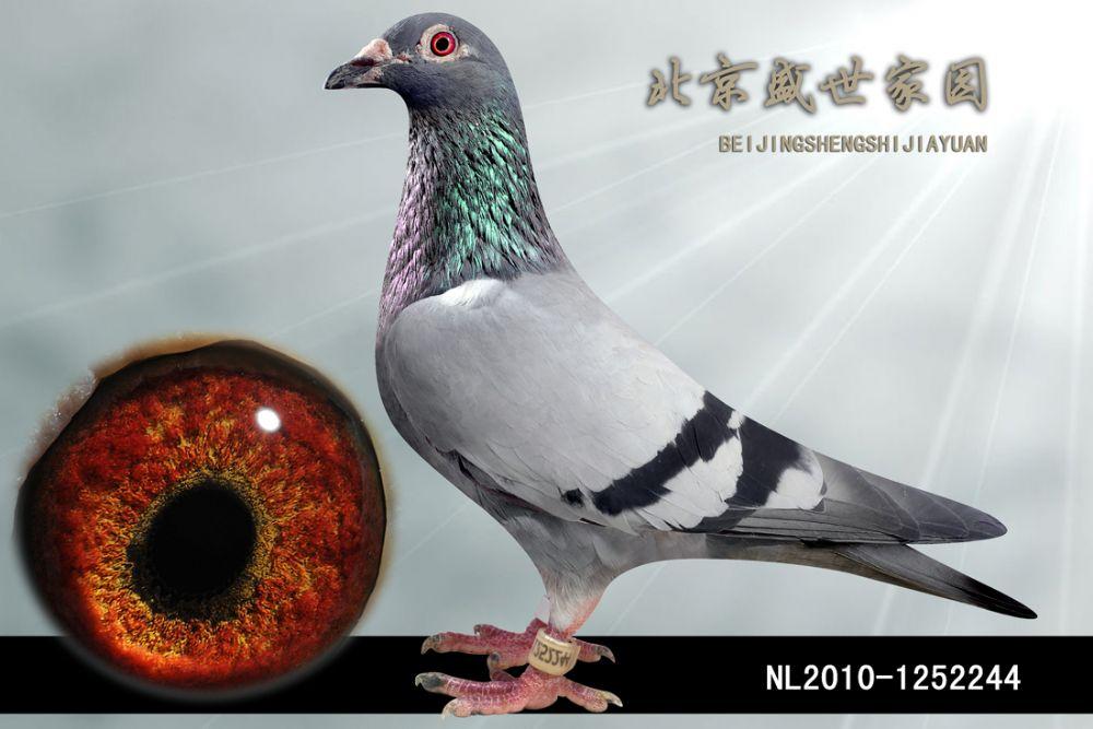NL2010-1252244