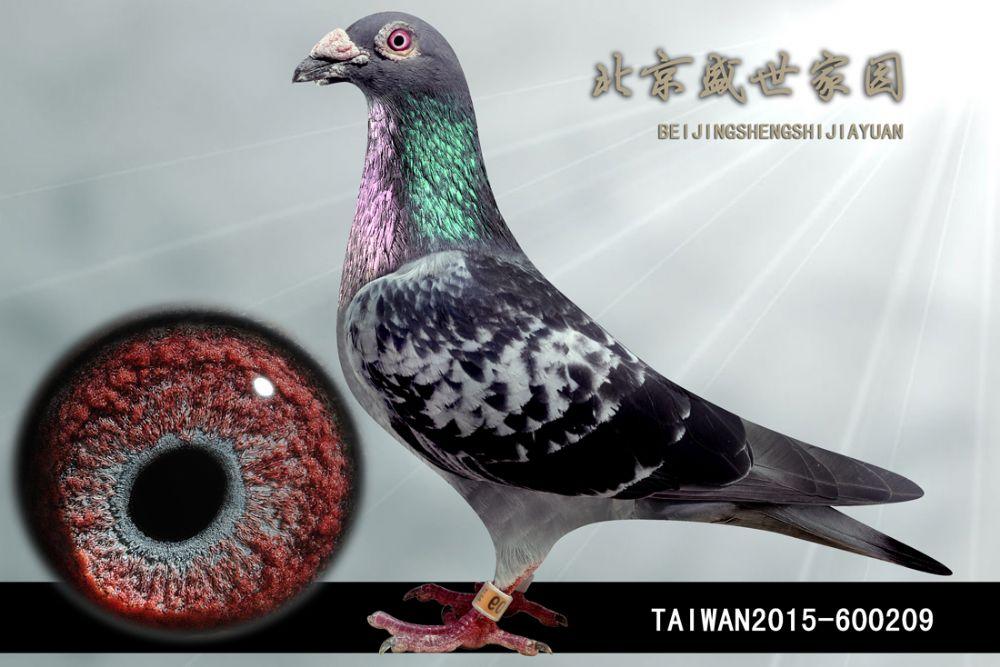 TAIWAN2015-600209
