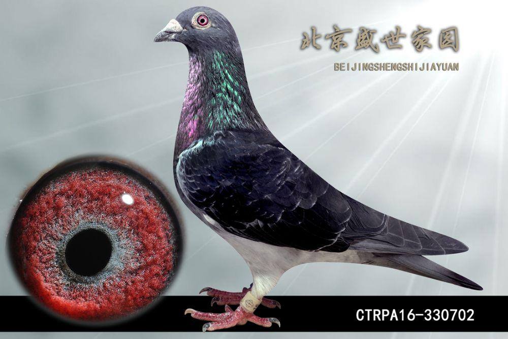 CTRPA16-330702