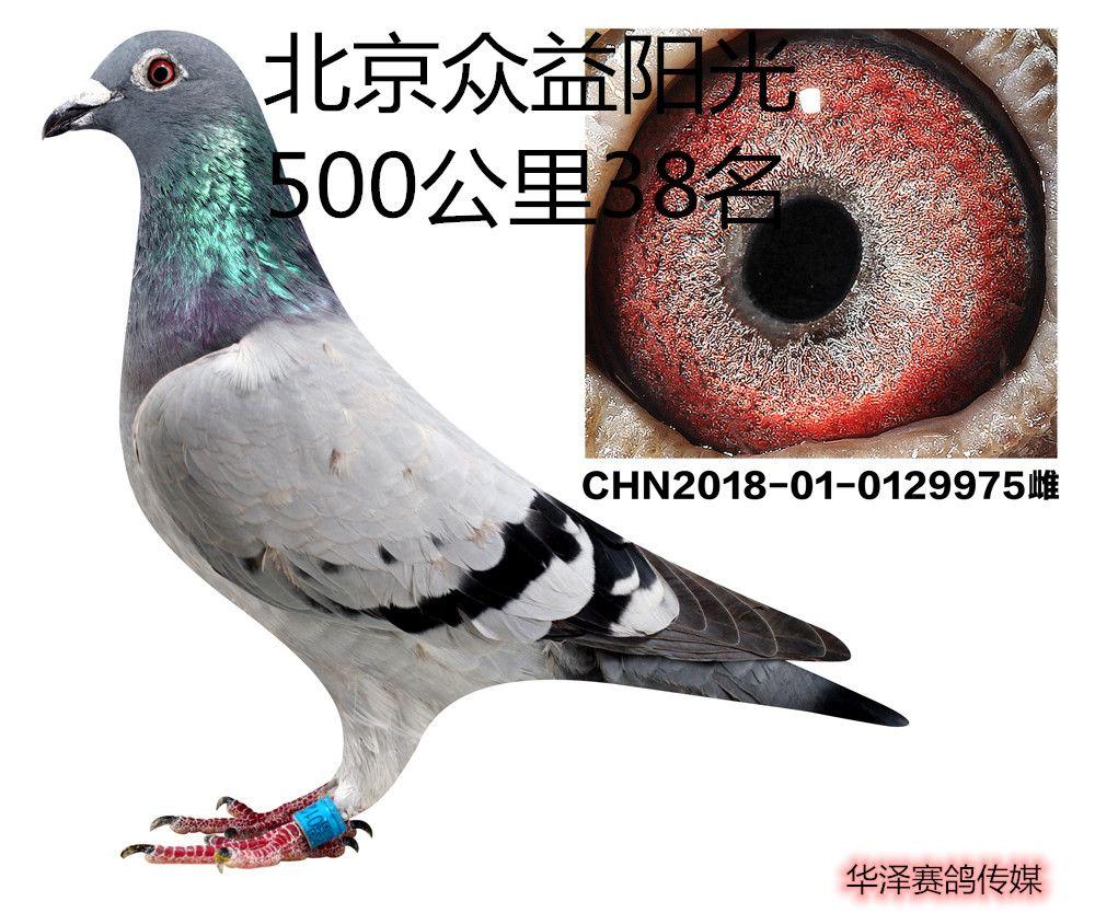 华泽传媒模板