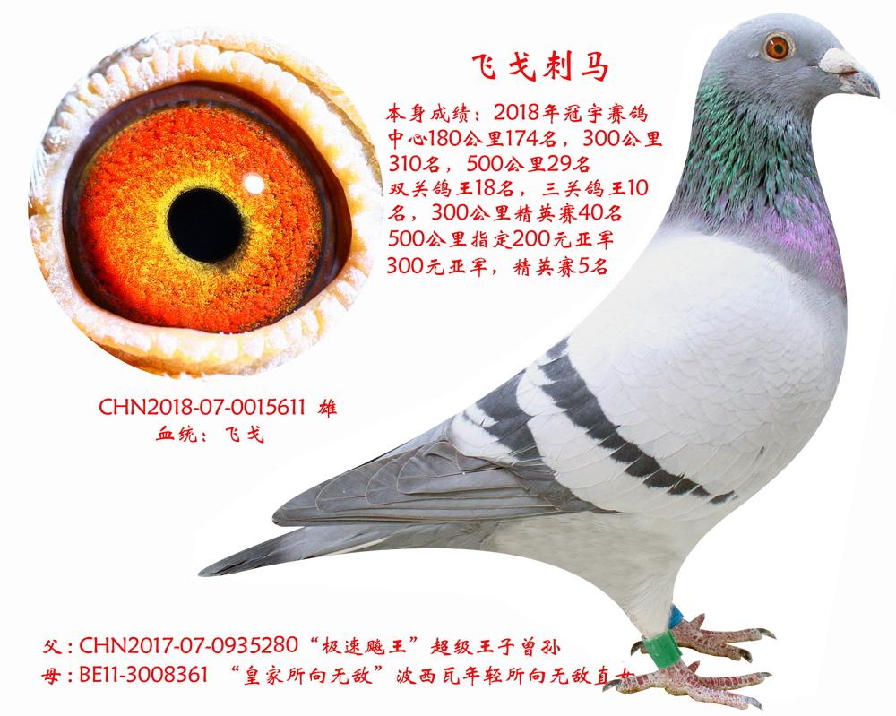 克里克吉诺【飞戈刺马】三关鸽王十名