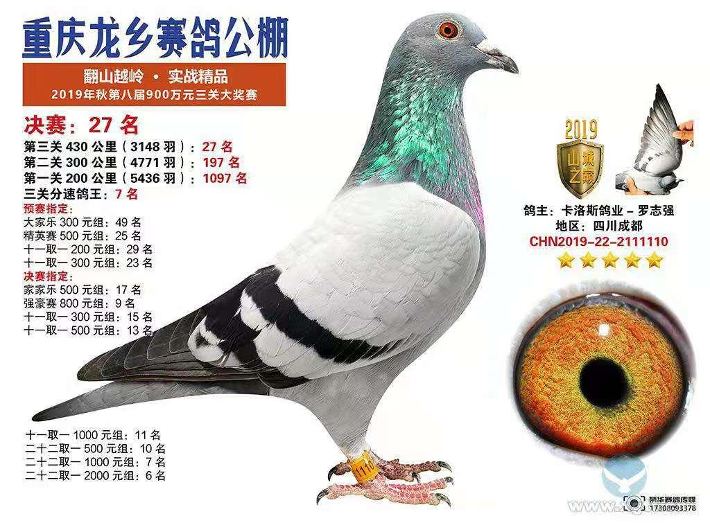 重庆龙乡公棚综合鸽王7名