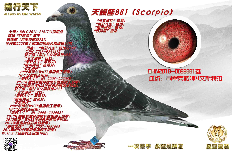 新生代种鸽881
