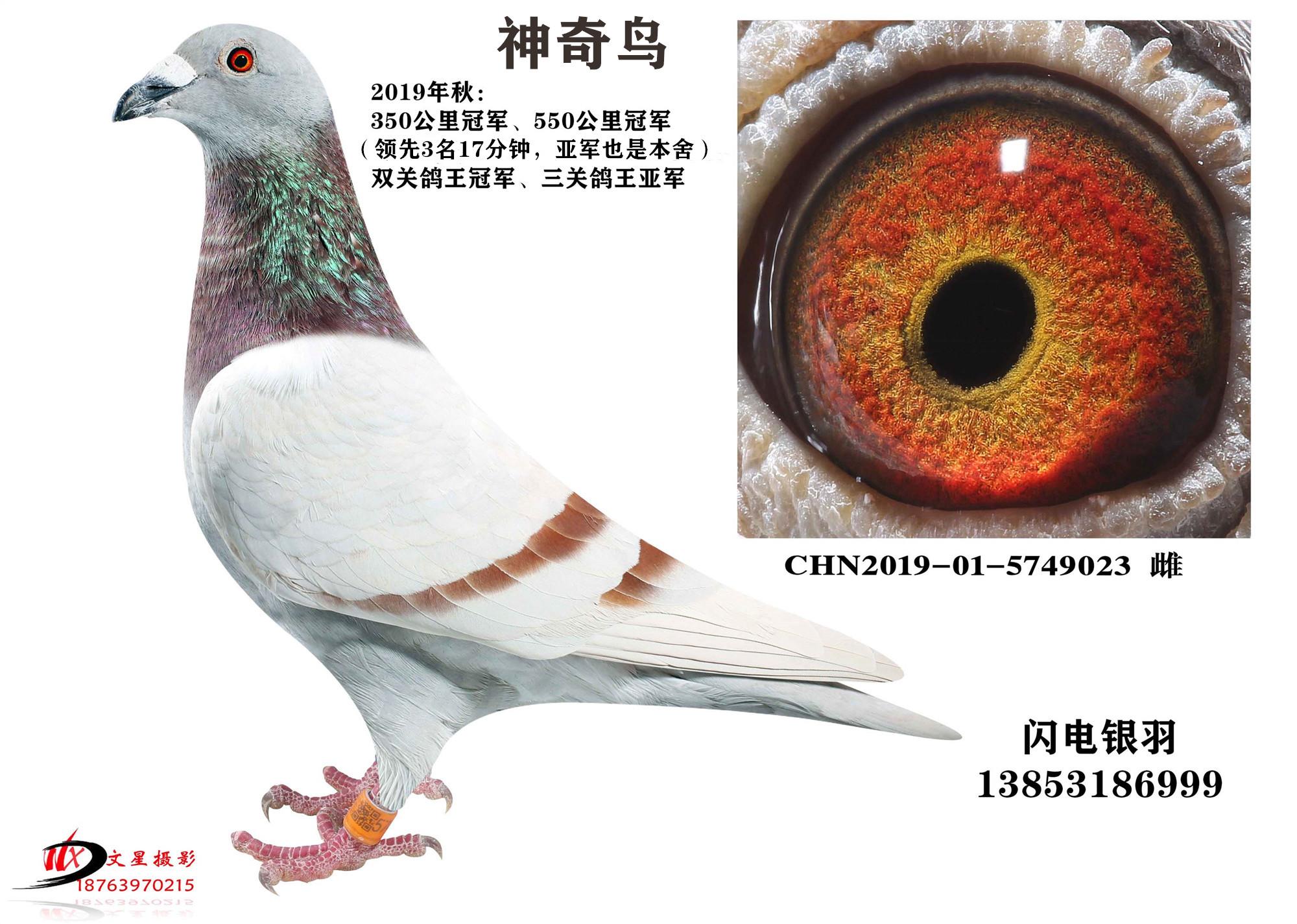神奇鸟(双关冠军、三关亚军)