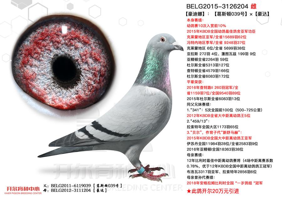 【豪迪娜】本身幼鸽赛10次入赏前10%