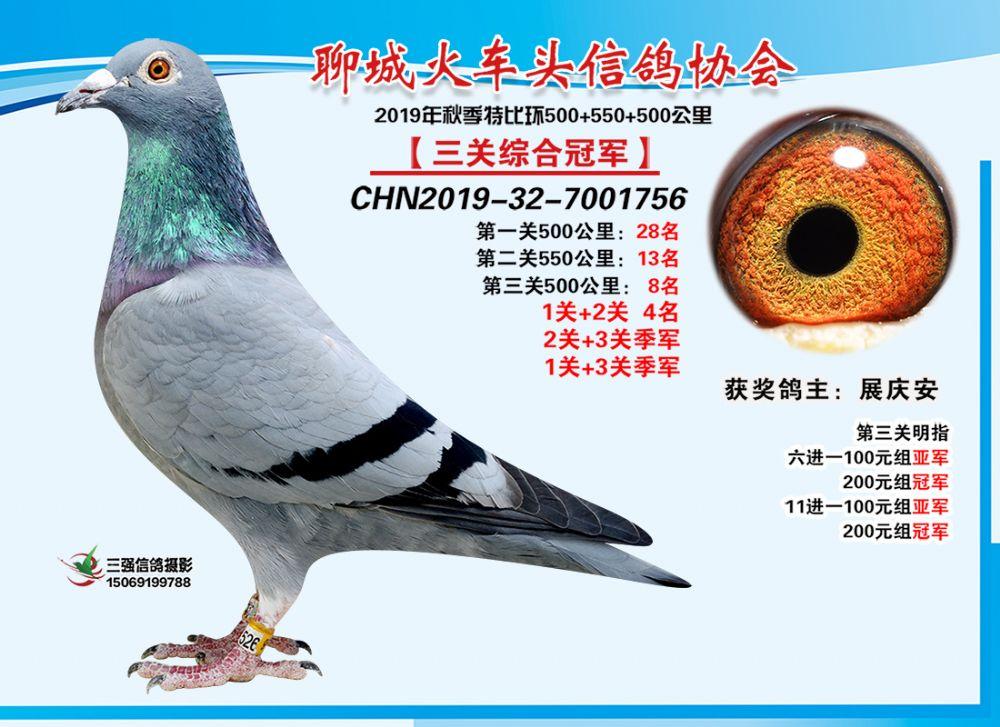 聊城火车头信鸽协会《三关鸽王总冠军》