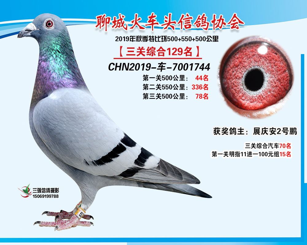 聊城火车头信鸽协会三关鸽王129名