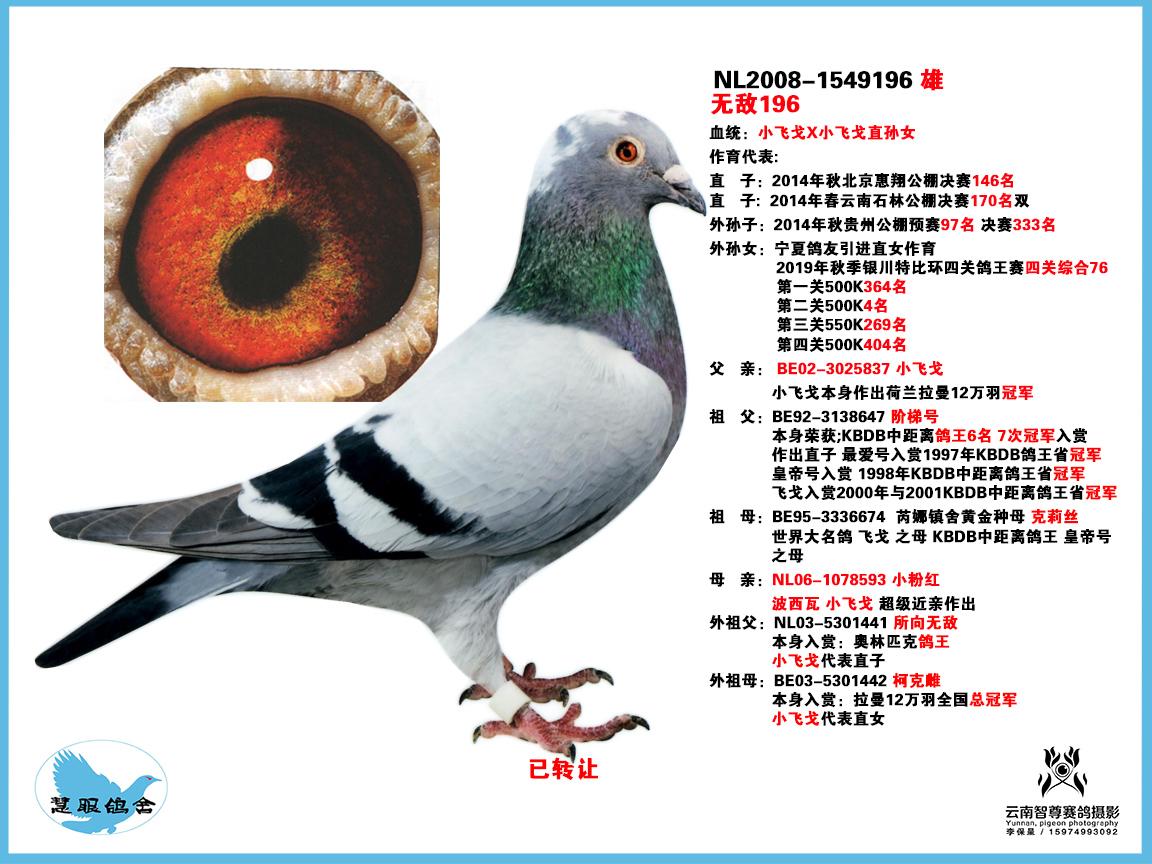 小飞戈直子无敌196(已转售北京宫王府)