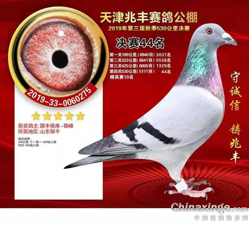 2019年天津兆丰赛鸽公棚决赛44名