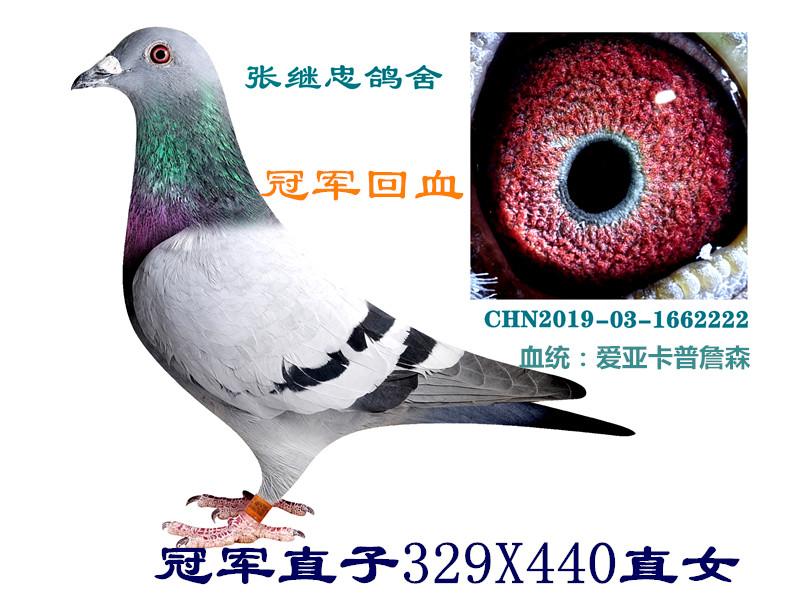 冠军直子329直女(回血)1662222