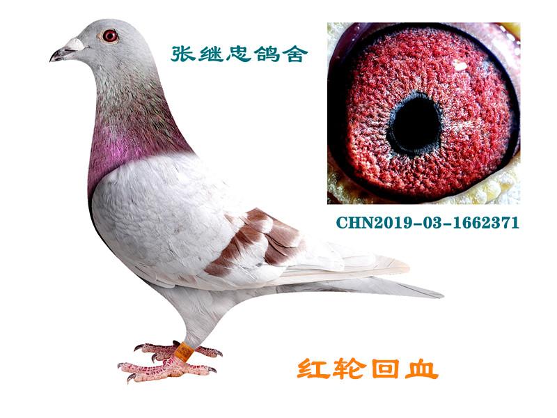 红轮直子×外孙女(回血)1662371