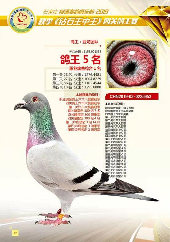 亚龙鸽业---职业鸽舍冠军鸽
