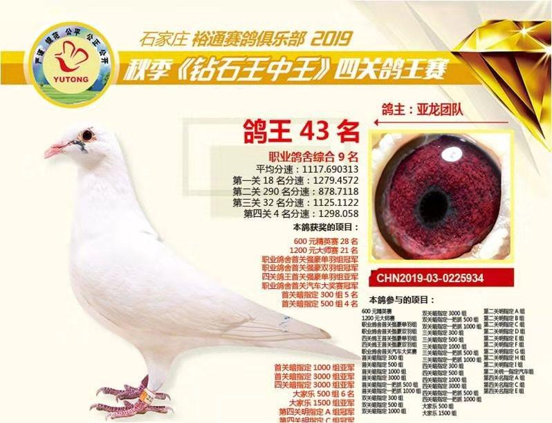 亚龙鸽业---获奖鸽