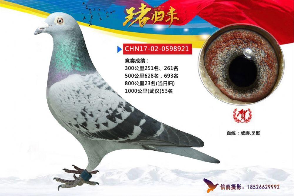 武汉921