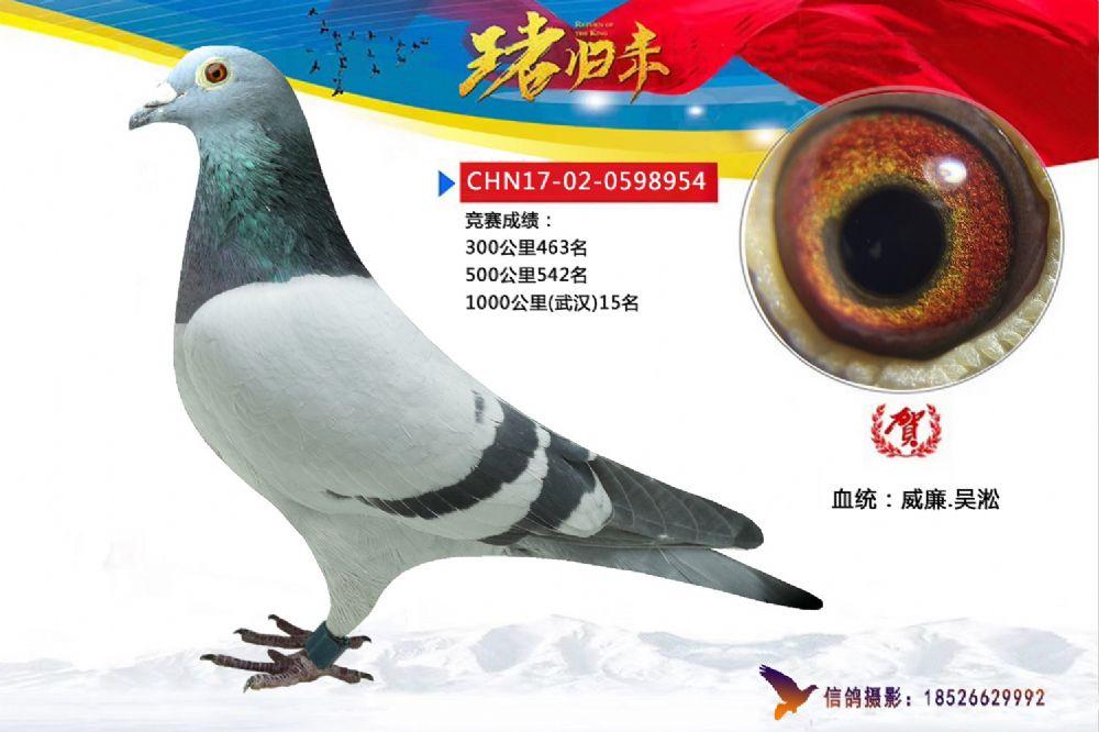 武汉954