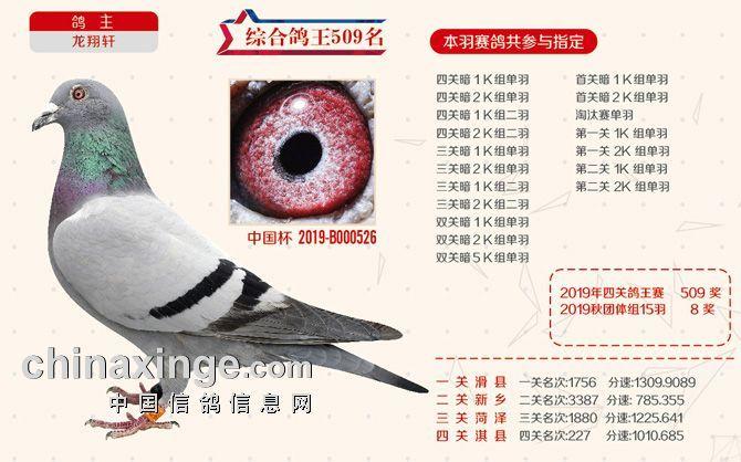 2019秋季北京开创者综合鸽王509名