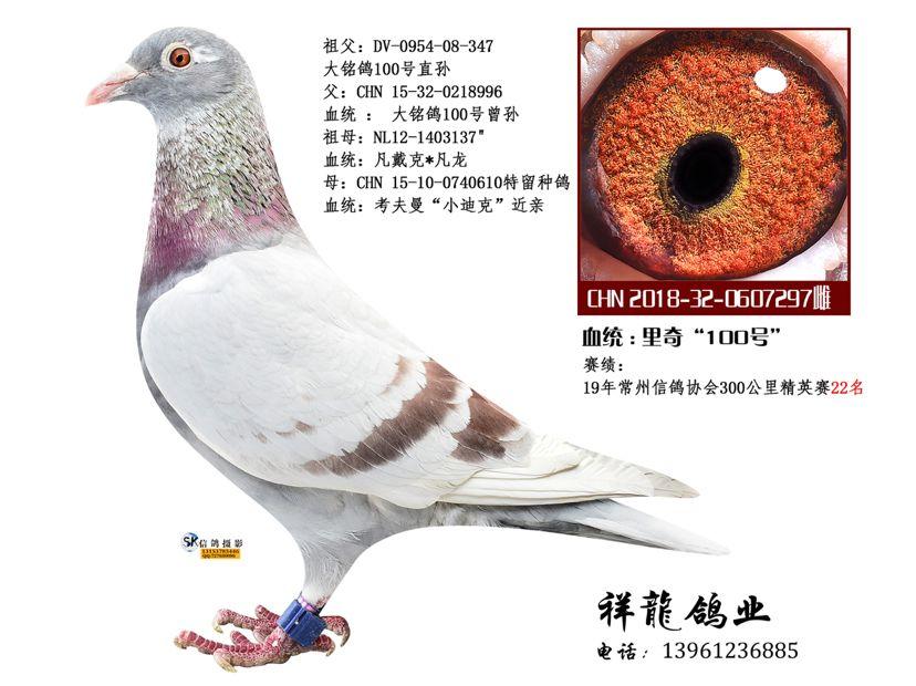 祥��至尊孙女-理奇97
