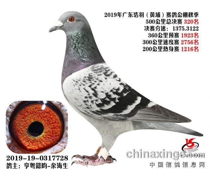 """【浩羽320】""""大白鲨""""曾孙!"""