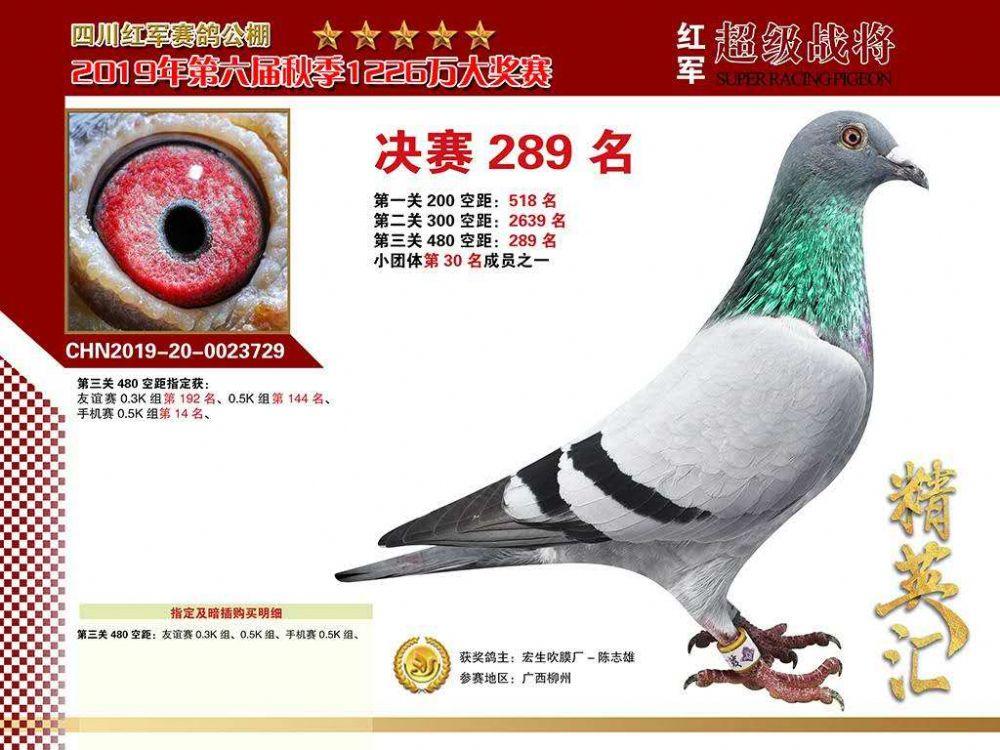 CHN2019-20-0023729