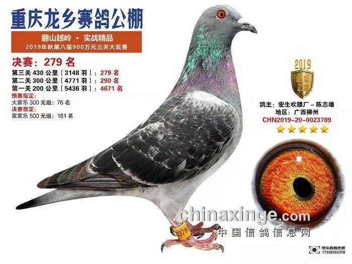 CHN2019-20-0023789