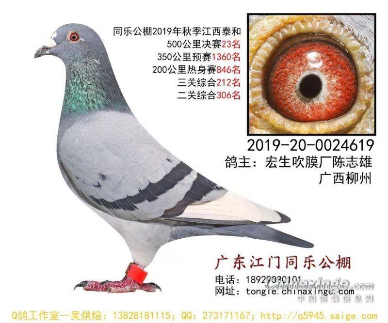 CHN2019-20-0024619