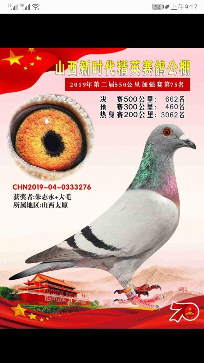 龙鑫276