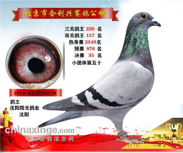 北京合利兴公棚决赛决赛35