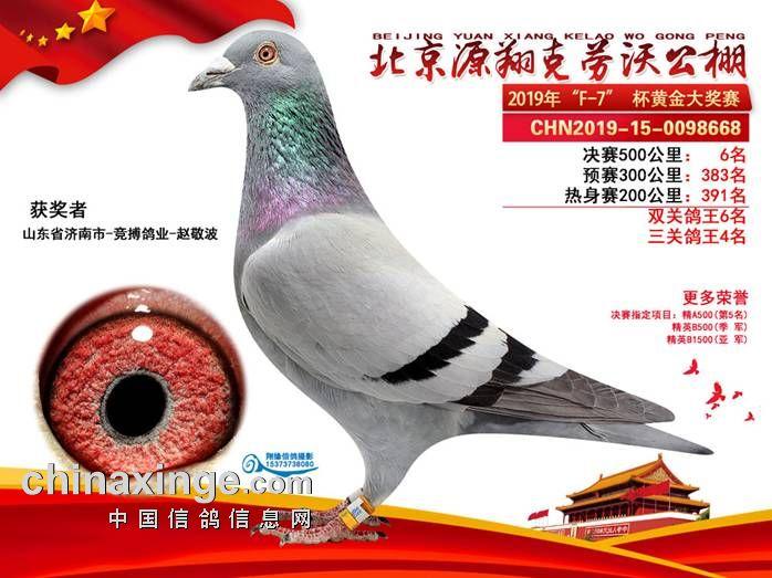 2020年超级种鸽