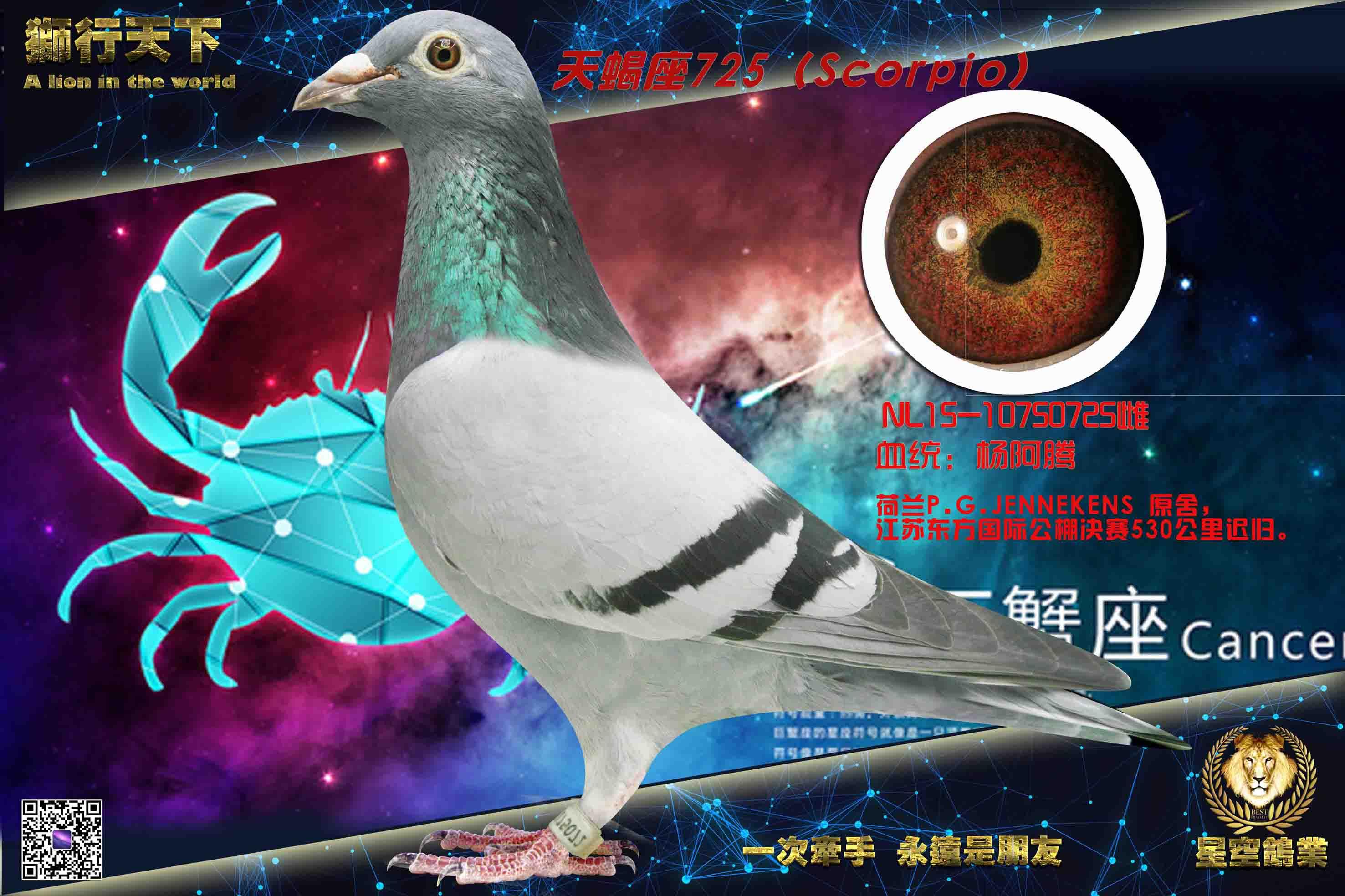 天蝎座(杨阿腾725)