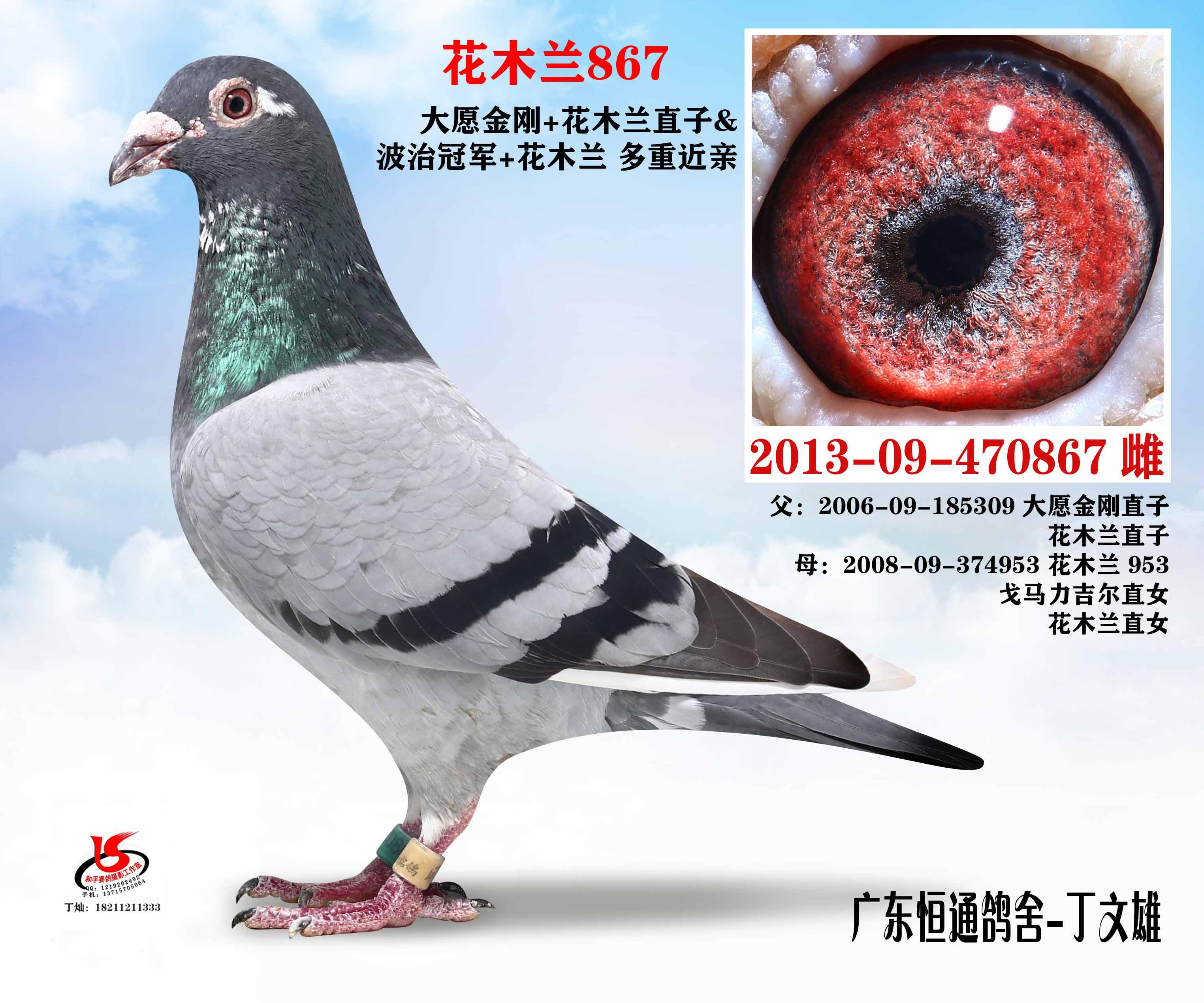 花木兰867