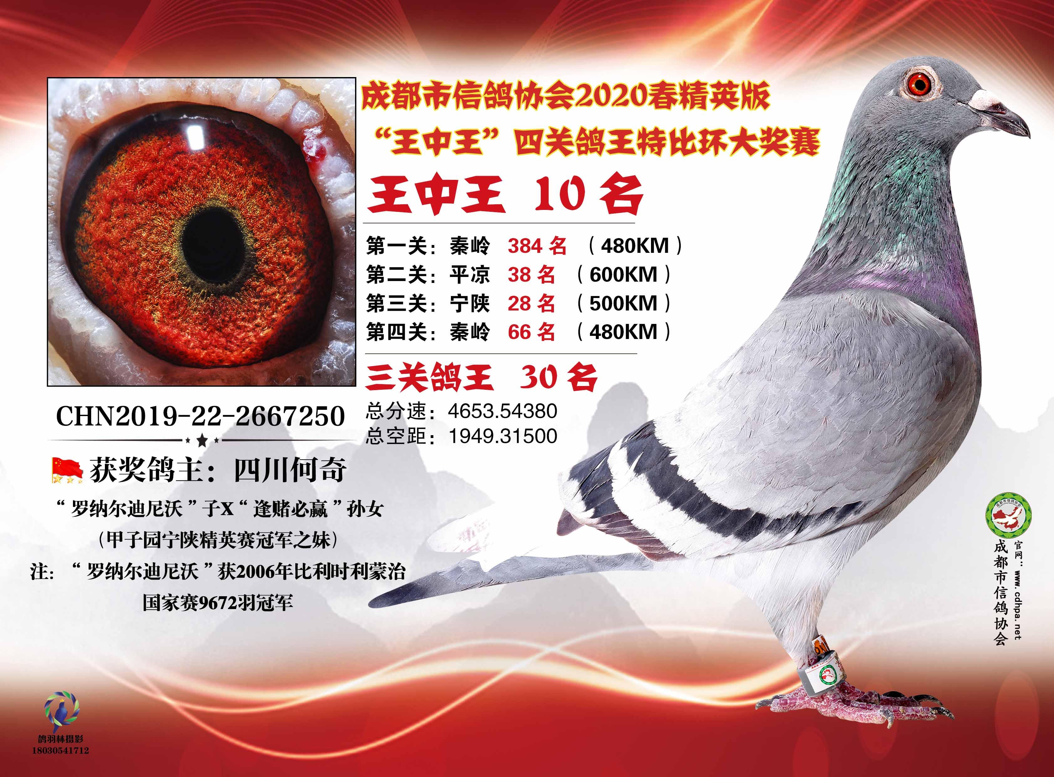 """成都市鸽协四关鸽王""""王中王""""10名"""