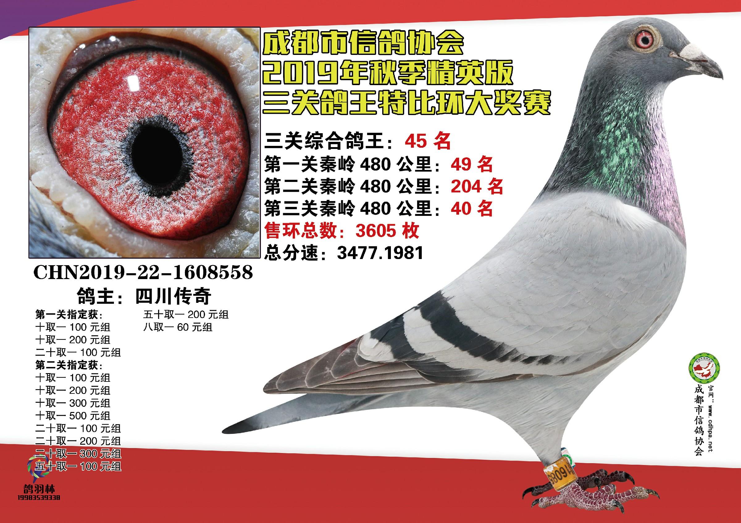 19秋成都市鸽协三关鸽王45名