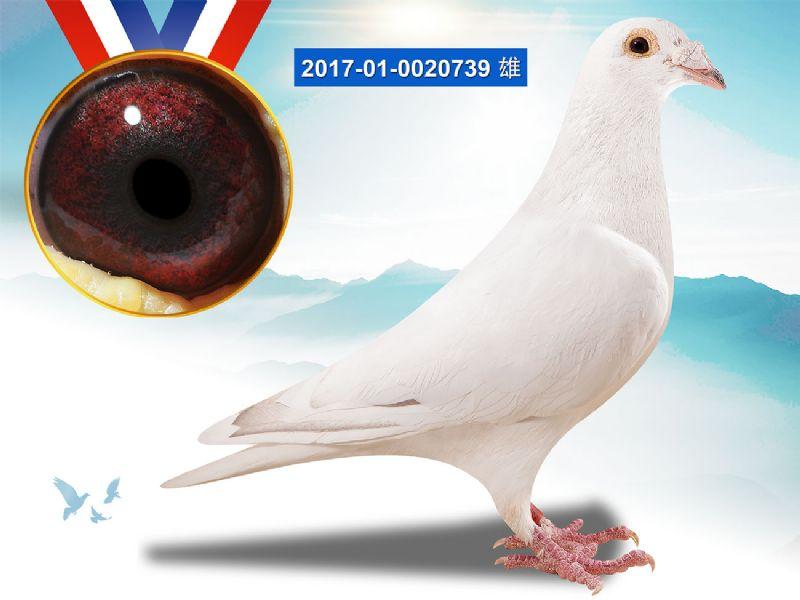 王子风笛号(子代)