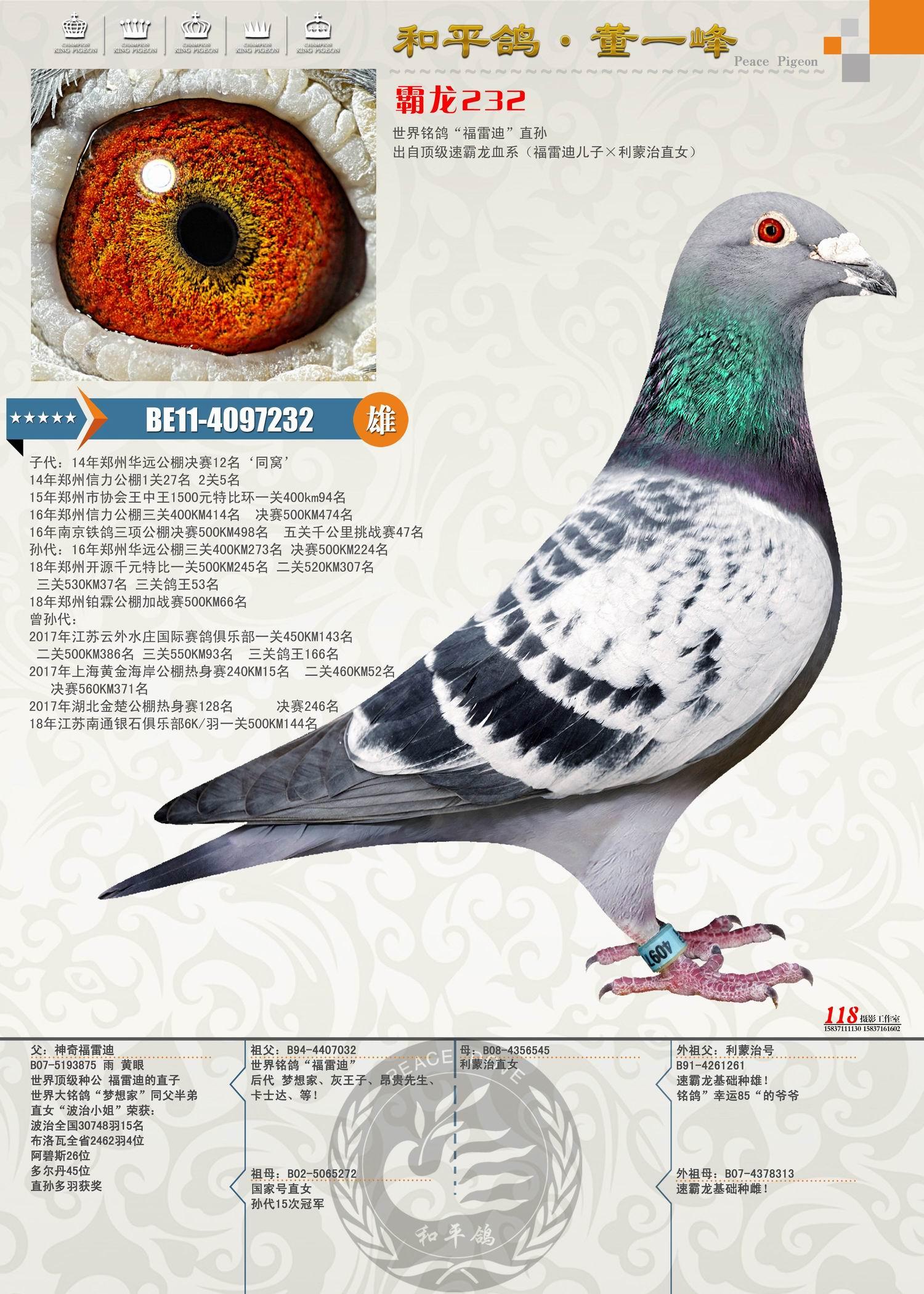 霸龙232(福雷迪儿子×利蒙治号女儿)