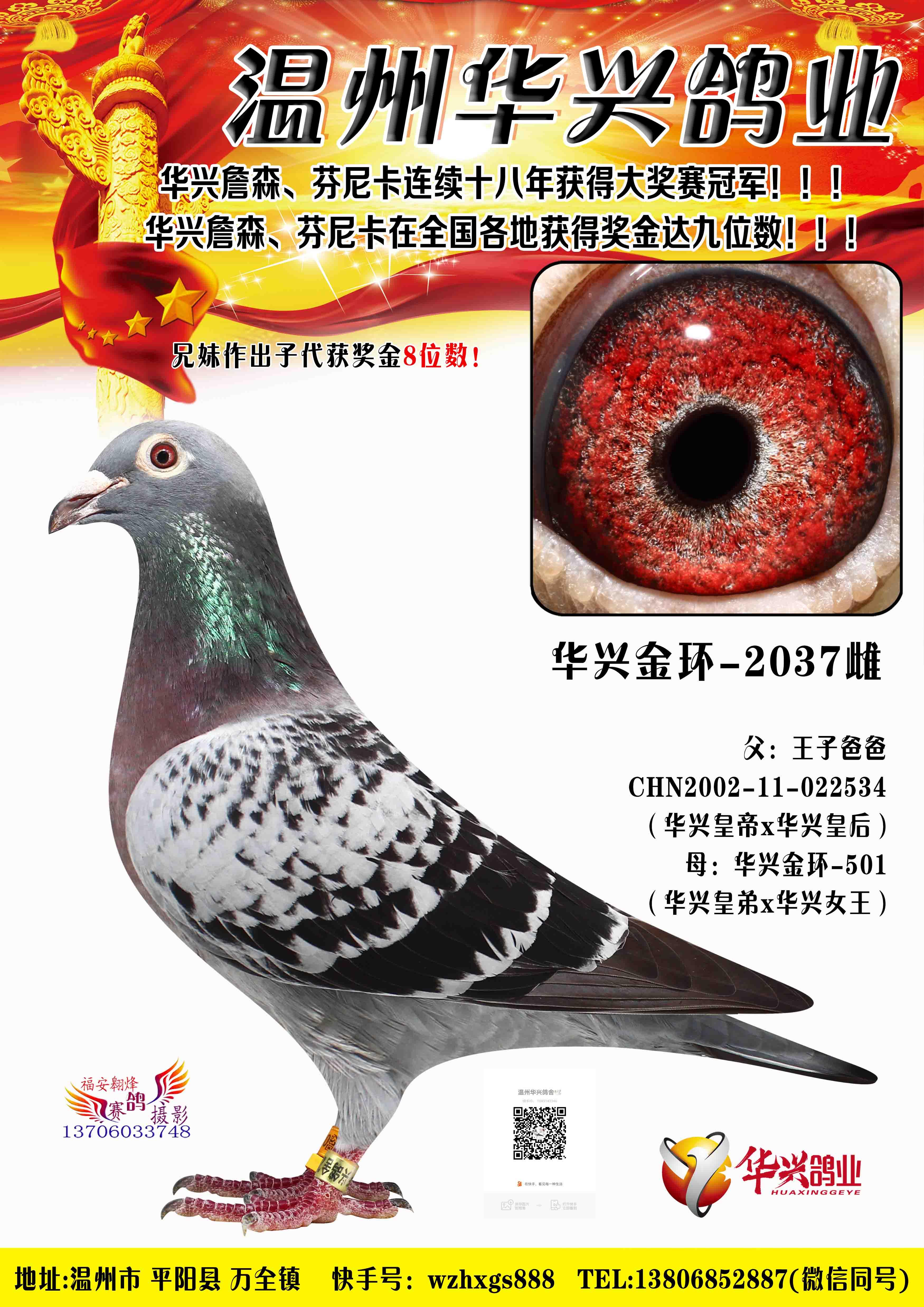 华兴金环2037