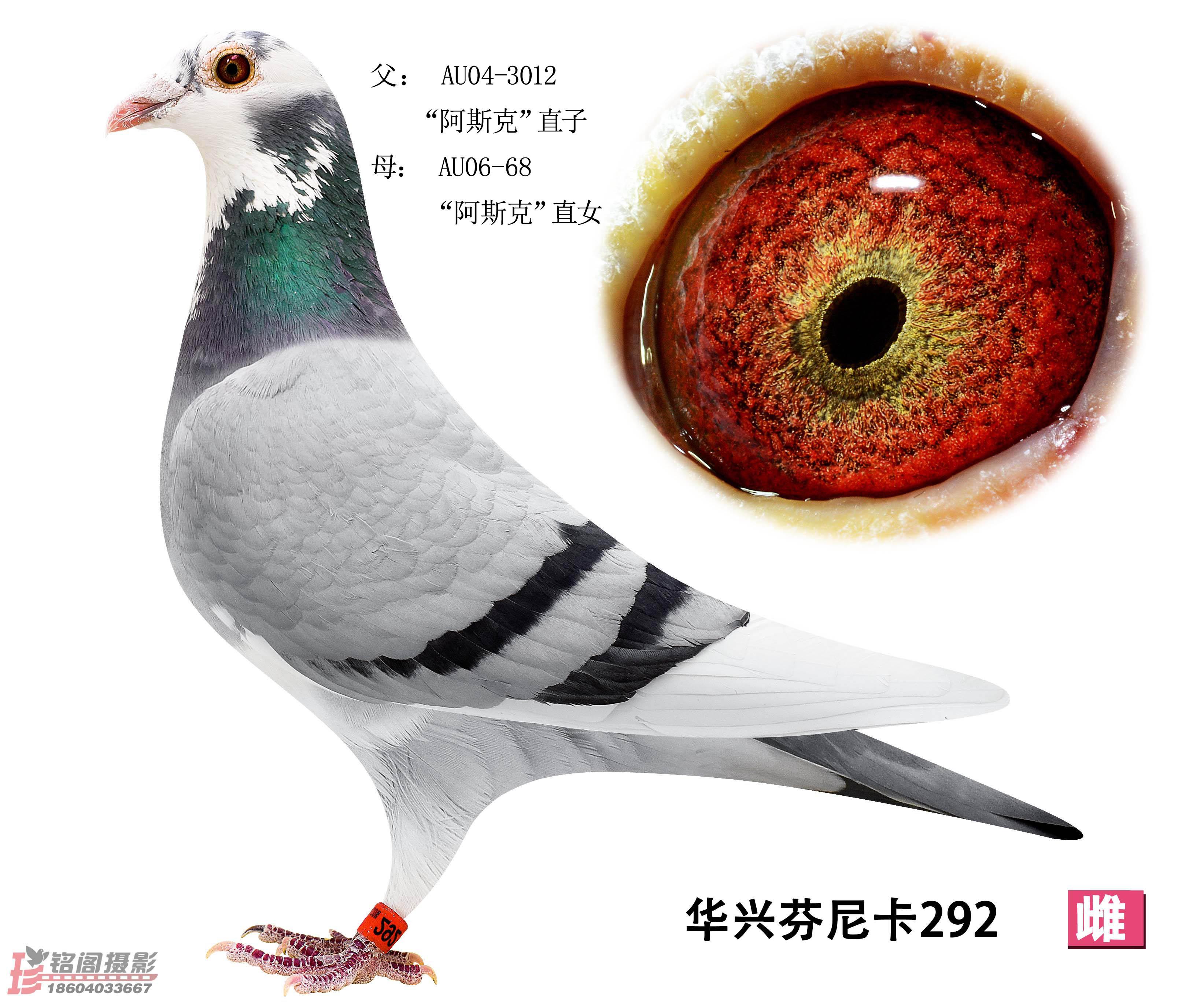 华兴芬尼卡292